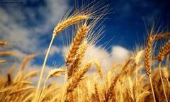 Сид Юкрейн - семена подсолнечника, технологии выращивания подсолнечника, удобреня для подсолнечника, гербицид по подсолнечнику, унас цена лучшая.